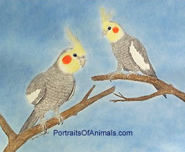Cockatiels Portrait