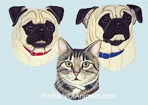 2 Pugs and a Tabby Cat Portrait - Pet Portraits by Cherie