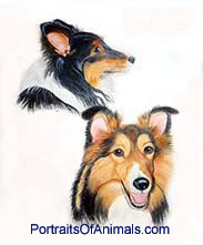 2 Shelties Dog Portrait - Pet Portraits by Cherie