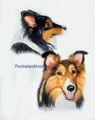 2 Shelties Portrait - Pet Portraits by Cherie