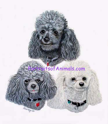 Pet Portraits by Cherie - 3 Poodles Pet Portrait