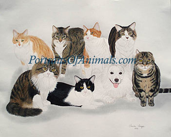 8 cats in a portrait