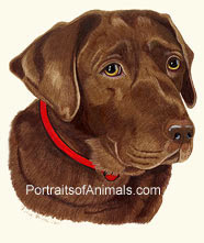 Chocolate Lab Dog Portrait - Pet Portraits by Cherie