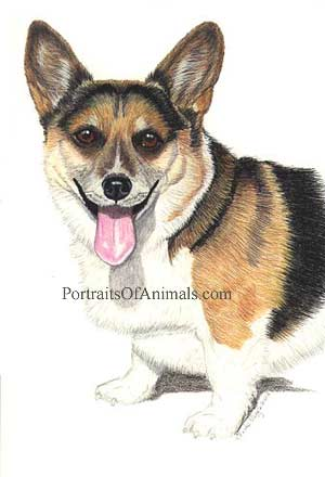 Corgi Portrait - Pet Portraits by Cherie