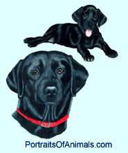 Black Lab (Labrador) Dog Portrait - Pet Portraits by Cherie