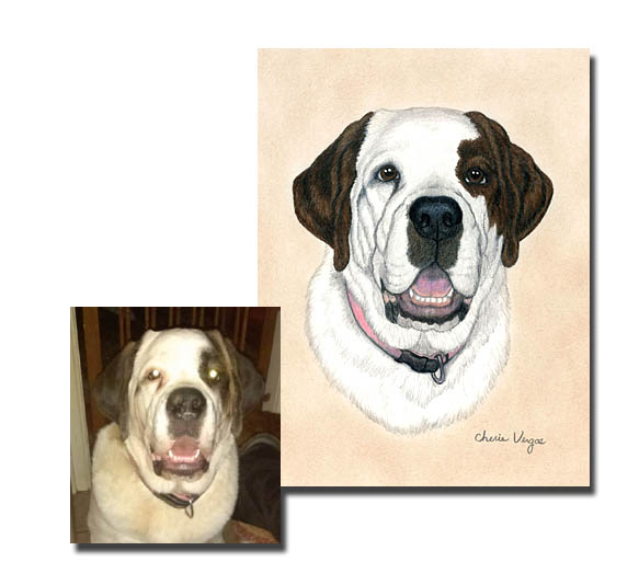 St Bernard Dog Pet Portrait