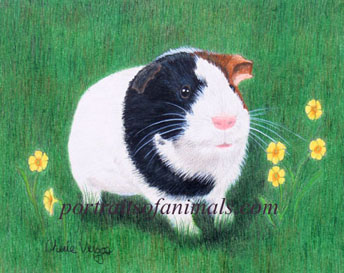 Guinea Pig Portrait -  Pet Portraits by Cherie Vergos
