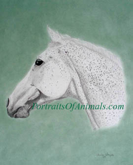 Warmblood Horse Portrait - Pet Portraits by Cherie Vergos