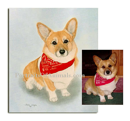 Custom Corgi Dog Portrait and reference photo