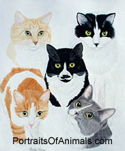 5 Cats Portrait