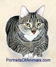 Tiger Cat Portrait