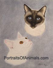 Siamese Cat and White Cat Portrait - Pet Portraits by Cherie