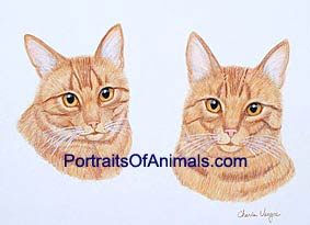 Tiger Cat Portrait - Pet Portraits by Cherie
