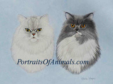 Persian Cat portrait painting