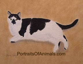 Black & White Domestic Shorthair Cat Portrait