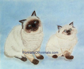 Himalayan Cats Portrait