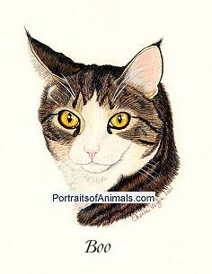 Cat Portrait- Boo- Pet Portraits by Cherie