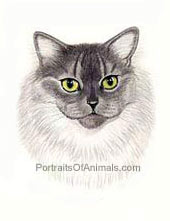 Himalayan Cat Portrait