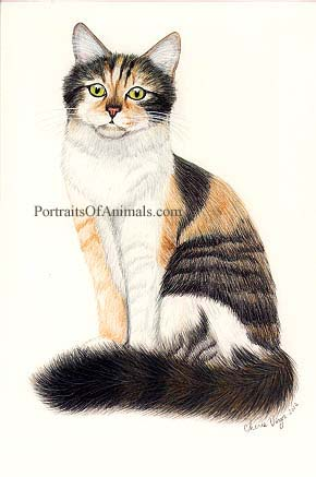 Calico Cat Portrait - Pet Portraits by Cherie