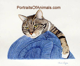 Tabby Cat Portrait