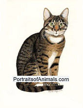 Tabby Cat Portrait - Full Body - Pet Portraits by Cherie