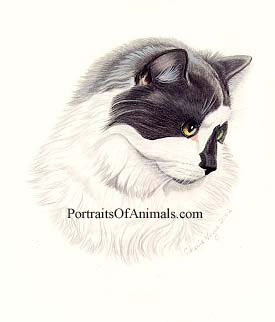 Cat Pet Portrait-Pet Portraits by Cherie