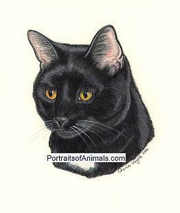 Black Cat Portrait- Pet Portraits by Cherie