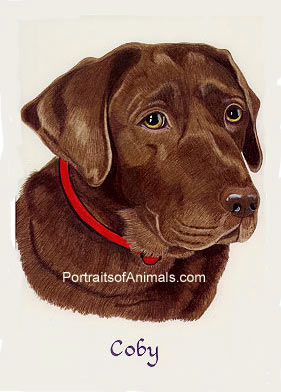 Chocolate Lab Portrait - Pet Portraits by Cherie