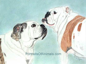2 Bulldogs Dog Portrait - Pet Portraits by Cherie