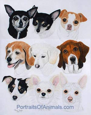 9 dogs in one portrait