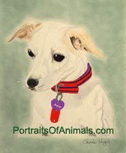 Rat Terrier Portrait - Pet Portraits by Cherie