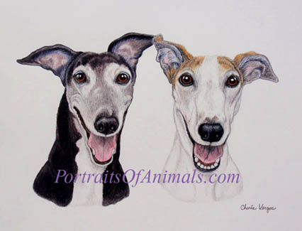 Greyhound Pet Portrait