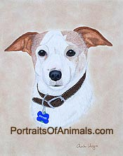 Fox Terrier Dog Portrait - Pet Portraits by Cherie