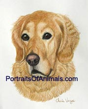 Golden Retriever Dog Portrait - Pet Portraits by Cherie