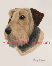 Airedale Portrait - Pet Portraits by Cherie Vergos