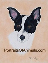 Rat Terrier Dog Portrait - Pet Portraits by Cherie