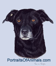 Black Lab Mix Dog Portrait - Pet Portraits by Cherie