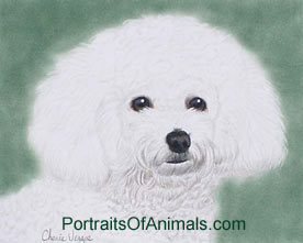 Bichon Frise Dog Portrait - Pet Portraits by Cherie