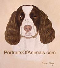 Springer Spaniel Portrait - Pet Portraits by Cherie