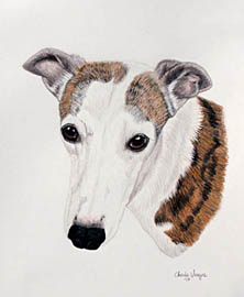 Pet Portrait of a Whippet - Pet Portraits by Cherie Vergos