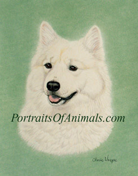 Eurasier Portrait- Pet Portraits by Cherie Vergos