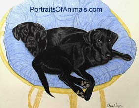 Black Labrador Retrievers Dog Portrait - Pet Portraits by Cherie