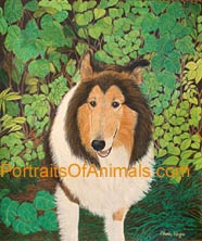 Collie Portrait - Pet Portraits by Cherie