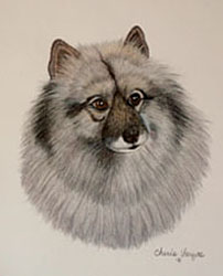 Keeshond Dog Portrait - Pet Portraits by Cherie Vergos