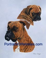 Boxer Dog Portrait - Pet Portraits by Cherie