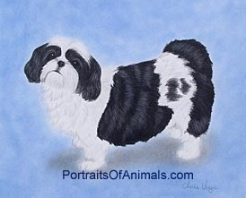 Shih Tzu Dog Portrait - Pet Portraits by Cherie