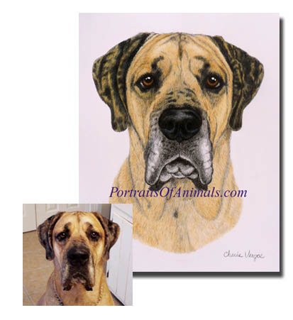 Great Dane Dog Portrait Painting