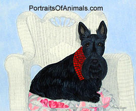 Scottish Terrier Dog Portrait