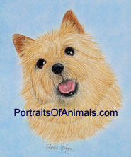 Norwich Terrier Dog Portrait - Pet Portraits by Cherie