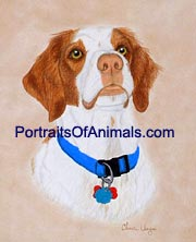 Brittany Spaniel Dog Portrait - Pet Portraits by Cherie